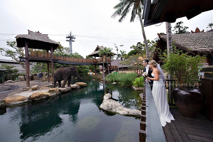 Elephant At Taronga Zoo